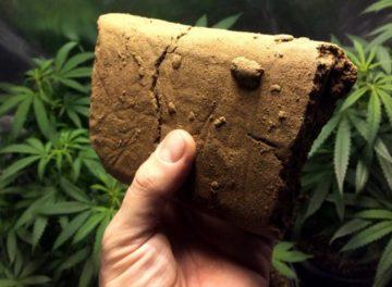 Сколько длиться синдром отмены от марихуаны сколько дней конопля